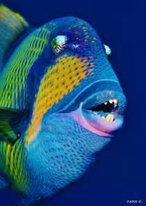 Parrot Head