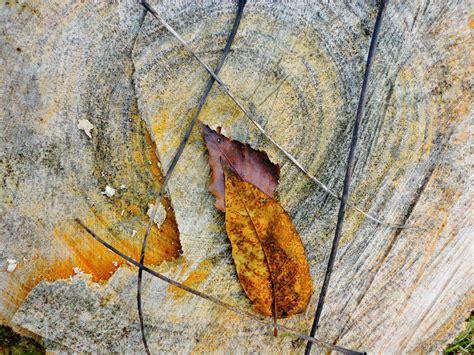 Landschaftspark Nord Gerda Lipski  Bilder Pinterest