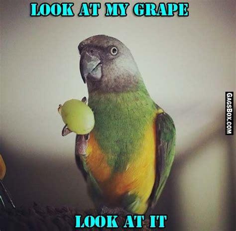 Parrot Meme - pinterest the world s catalog of ideas
