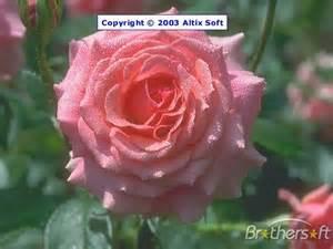 Flower Screensavers Free Downloads