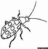 Beetle Coloring Pages Insect Dung Beetles Spotted Cucumber Weevil Printable Animal Designlooter Animals Drawings 565px 74kb sketch template