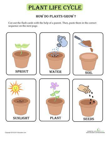 imgs  parts  plants worksheet  preschool heads