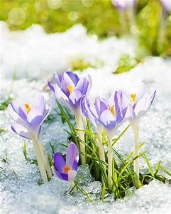 Was Sind Frühlingsblumen : fr hlingsblumen das m ssen sie beim pflanzen beachten ~ Whattoseeinmadrid.com Haus und Dekorationen