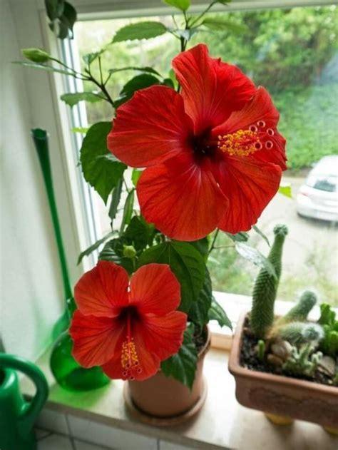 Aptieka uz palodzes - 5 ārstnieciskie istabas augi, kuri ...