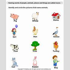 Identify Animal Nouns Worksheet  Turtle Diary