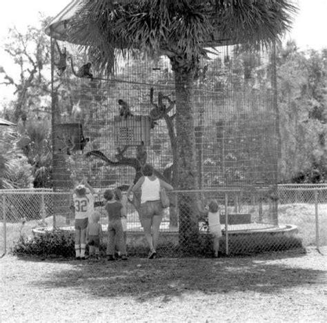 florida memory monkey cage in sanford s zoo sanford