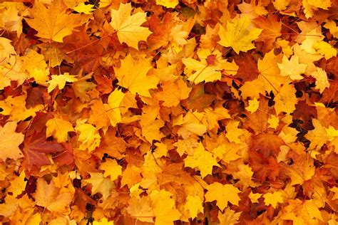 Gold Autumn Wallpapers by Autumn Background Color 183 Free Photo On Pixabay