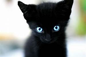 animals, black, blue eyes, cat, cute - image #214527 on ...