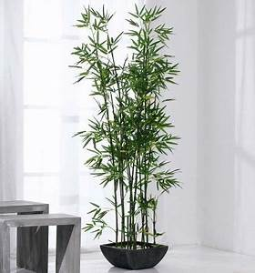 Bambus Pflege In Der Vase : zimmerbambus richtig pflegen planungswelten ~ Lizthompson.info Haus und Dekorationen