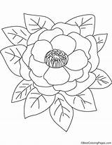 Pink Peony Coloring Pages sketch template