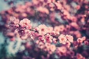 by Ryan Mahoney Facebook   Website  ... - Floralls