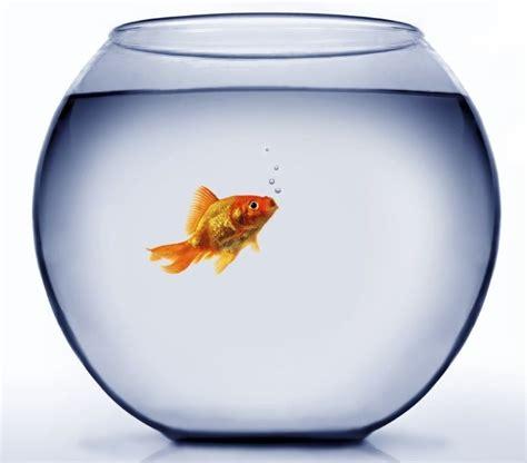 aquarium bocal poisson bocal poisson pas cher promo aquarium vrac it