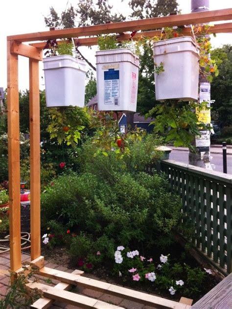diy upside  tomatoes  additional plants growing