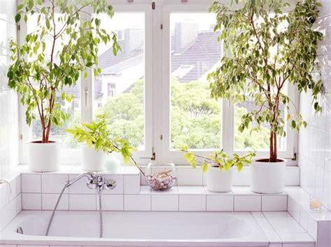 plante verte salle de bain la fabrique 224 d 233 co des plantes dans la salle de bain inspiration et conseils