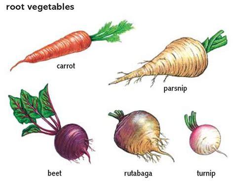 list of edible root 10 best root vegetables project images on root vegetables roots and vegetable garden
