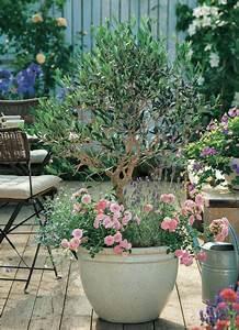 zwergrosen fur den topf mein schoner garten With französischer balkon mit rosen für den garten