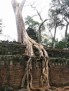 10 Tree Roots Winning Their Battle Against Concrete ...