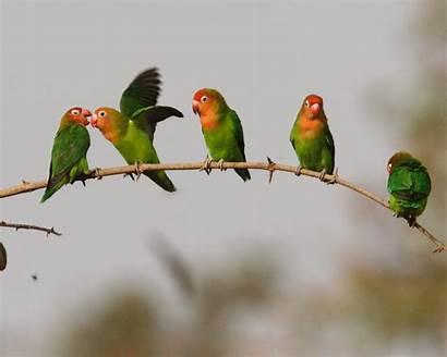 Bird Birds Desktop Wallpapers Windows Enlarge