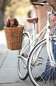 Hundekorb Fahrrad Hinten : hundekorb gesucht hier sind einige beispiele die ~ Jslefanu.com Haus und Dekorationen