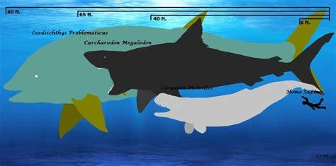 Megalodon Size Chart By Theguywhomakespizza On Deviantart