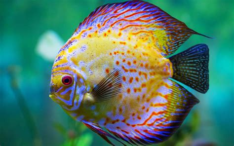 beautiful hd wallpaper yellow sea fish