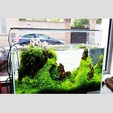 Aquascape B Y Aquadesignerboutique Aquariophilie
