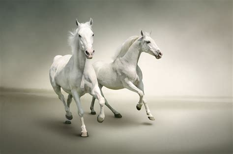 white horse wallpapers pictures images