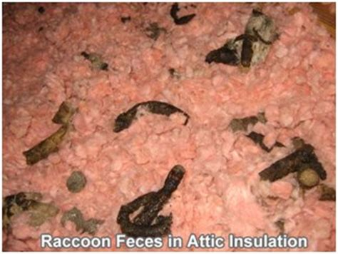 insulation removal ctgutterprollc