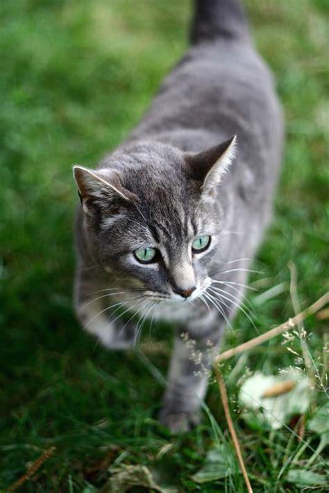 Wie Kann Ich Fremde Katzen Vertreiben?