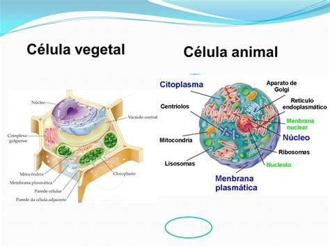 celula vegetal 3d c 233 lula vegetal 3d 2 186 em luca mendieta c 233 lula vegetal como hacer