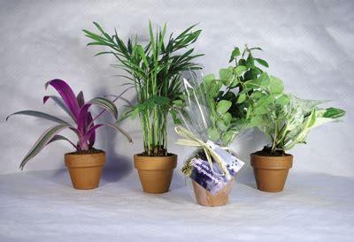 plante pour le bureau 8 plantes dépolluantes pour le bureau plantes