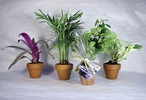 8 Plantes Dpolluantes Pour Le Bureau Plantes