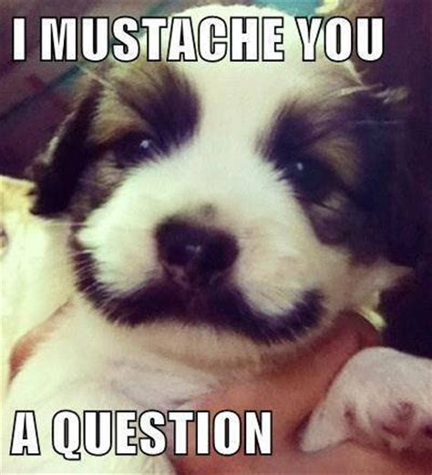 questions answers  steps  home animal rescue