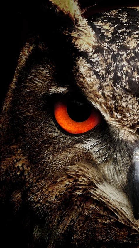 Owl Phone Wallpaper owl hd wallpaper for your huawei honor 8 smartphone