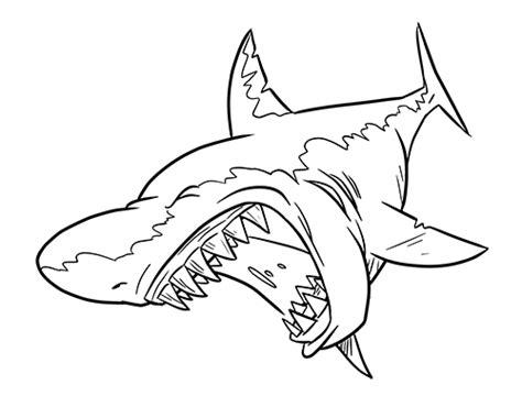 cartoon sharks clipartsco