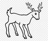 Coloring Mule Ciervo Colorear Dibujos Deer Ciervos Cartoon Dibujo Wild Bosque Animales Draw Drawing Easy Stubborn Animal Antilopes Renos Imprimir sketch template