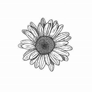 Daisy Design Black And White | www.pixshark.com - Images ...
