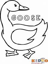 Coloring Pages Geese Goose Printable Popular sketch template