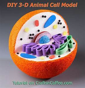 Excellent Tutorial To Make A Model Of An Animal Cell  Great For Science Class  Craftsncoffee Com