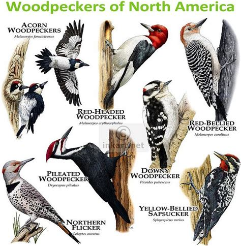 Woodpeckers Of North America  Recent Photos The Commons. Used Honda Salt Lake City Tornado Web Server. Gang Stalking Schizophrenia Nj Acura Dealer. Associates Degree In Radiology Salary. Rehab Centers In Arizona Dr Peterson Dentist. Commercial Real Estate Attorney. Doctoral Programs In Florida. Promotional Fulfillment Services Inc. Oak Hills Pest Control Free Sign Maker Online