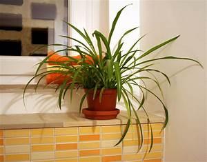 Badezimmer Pflanzen Ohne Fenster : mehr spa im bad mit pflanzen landwirtschaftskammer nordrhein westfalen ~ Bigdaddyawards.com Haus und Dekorationen
