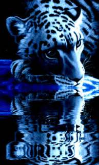 tiger  wallpaper  gallery