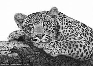 Realistic Leopard Drawing