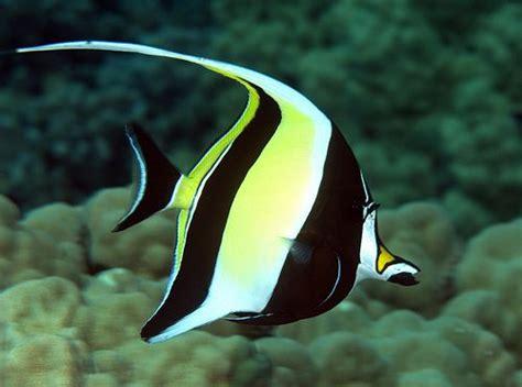top 12 plus beaux poissons dans le monde