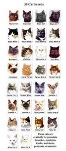 list of cat breeds cat breeds 6 best list of cat breeds with pictures