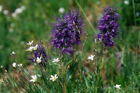 17 best images about colorado flowers plants