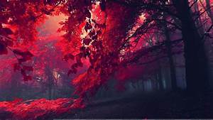 Who Wants To Walk In This Beautiful Red Forest? Wallpaper