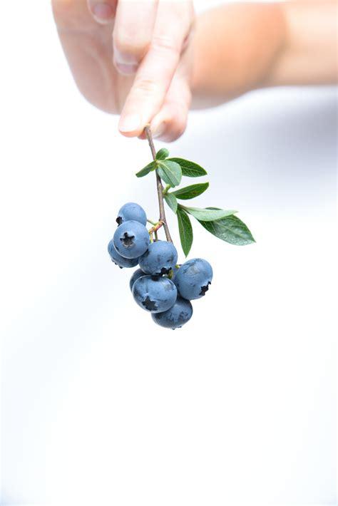 stock photo  berries blueberries food