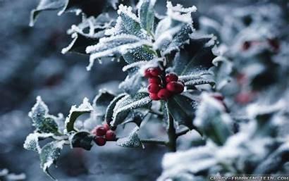 Winter Berries Kb Wallpapersafari