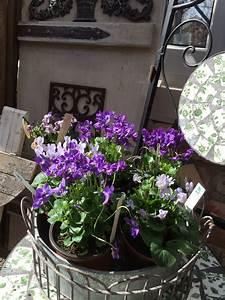 Garten Im März : aktuelle fotos vom garten im m rz pflanzen art ~ Lizthompson.info Haus und Dekorationen
